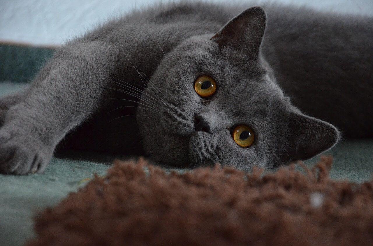 feral kittens adoption