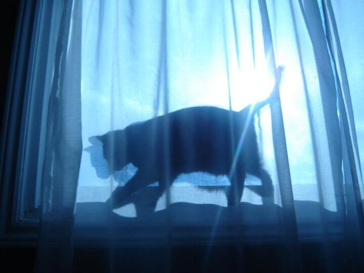 Черная кошка во сне - примета
