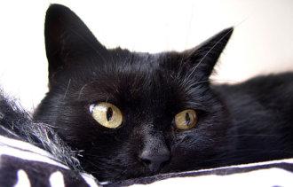 Приметы про черную кошку