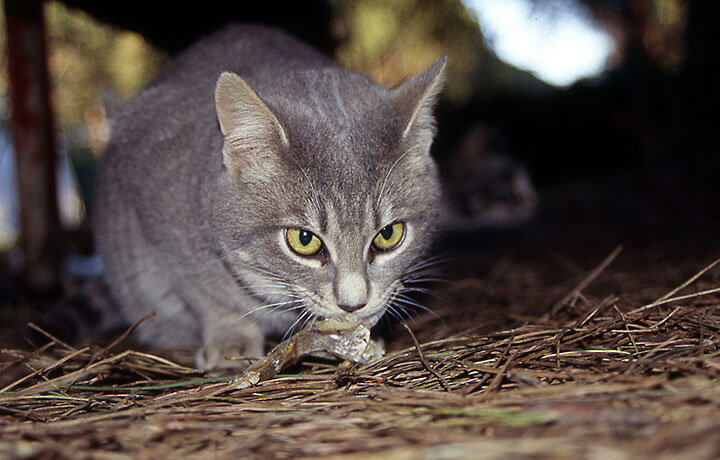 Примета если серый кот дома