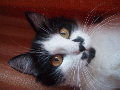 Осязание у кошек