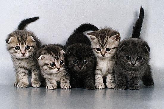 Особенности разных пород кошек