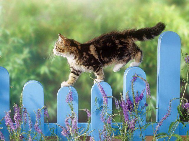 Чувство равновесия у кошек