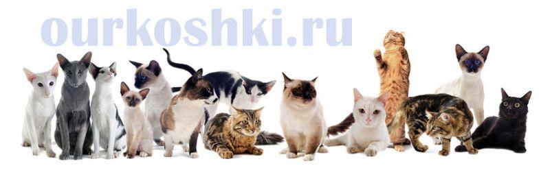 Классификация кошек по шерстному покрову
