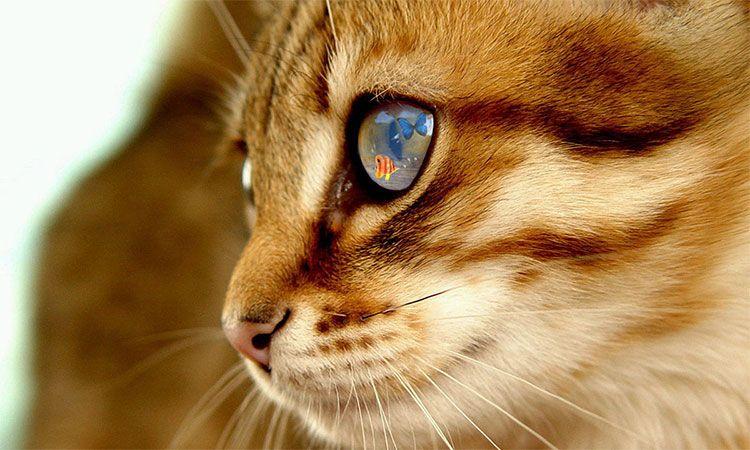 Биологические особенности кошки