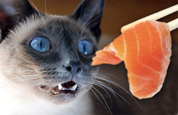 Источники белков для кошек– рыбные продукты