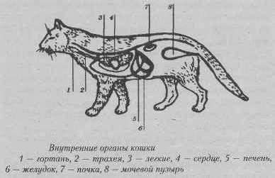 Органы дыхания у кошек