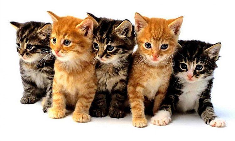 Правила выбора корма для котят