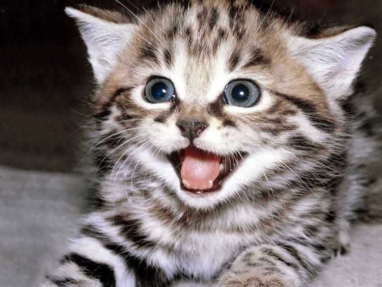 Выбор питомца: племенные кошки