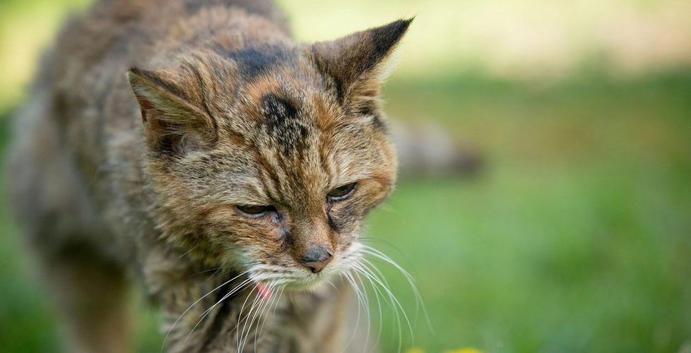 Корм для старых кошек