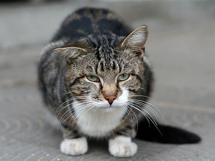Причины и профилактика запоров у кошек