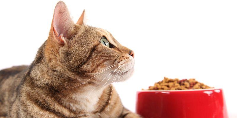 Как приучить кошку к искусственному корму?