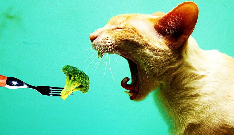 Источники углеводов для кошек