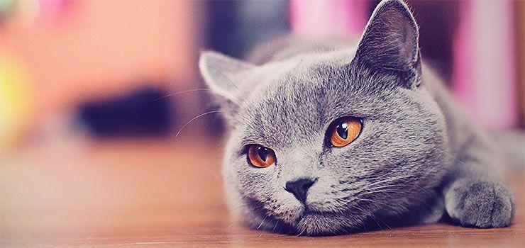 Гастрит у кошки и его лечение