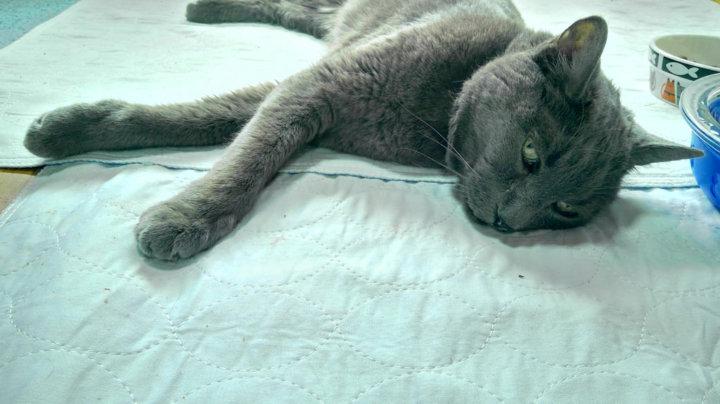 симптомы отправления кота