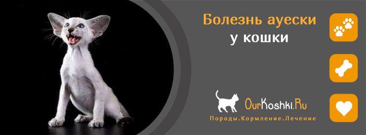 Болезнь Ауески у кошек