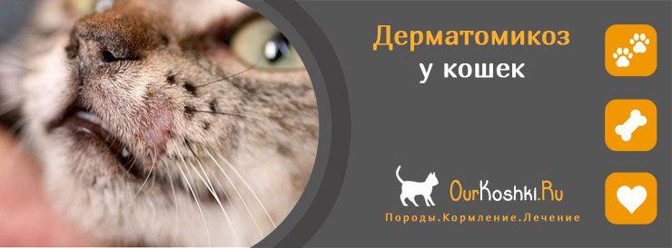 Дерматомикоз у кошек