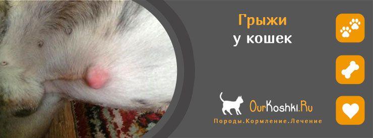 Кошка клещ лечение в домашних условиях