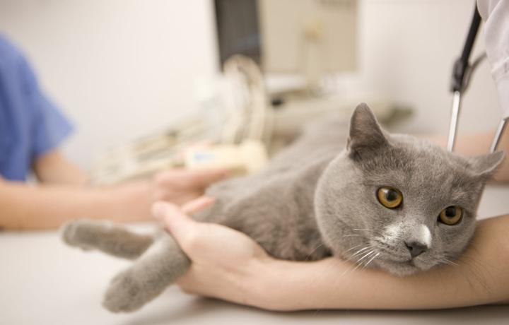 отравления кошек