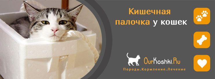 Кишечная палочка у кошек