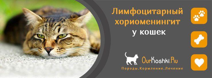 Лимфоцитарный хориоменингит у кошек
