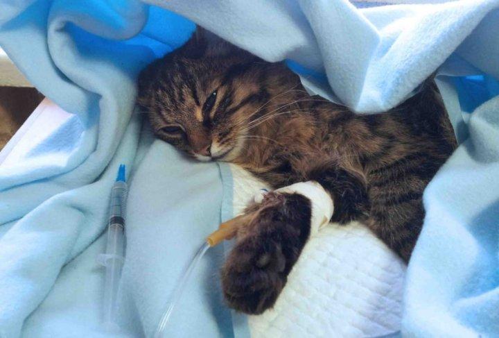 помощь кошке при отправлении