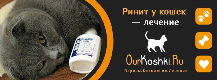 Ринит у кошек — лечение