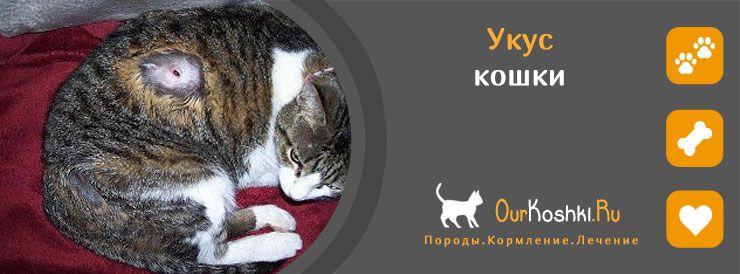 Укус кошки - лечение
