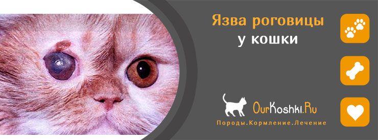 Язва роговицы у кошки