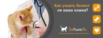 Как узнать болеет ли ваша кошка?