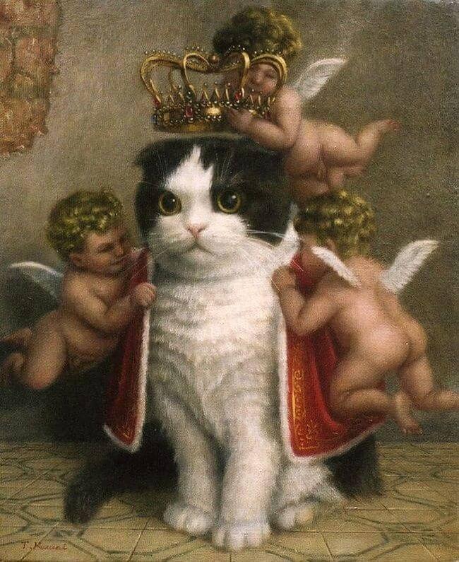 Кошка король