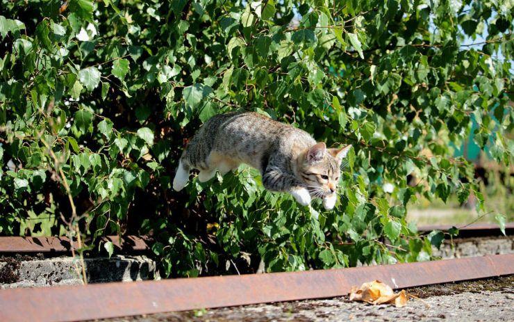 Физическая активность кошки