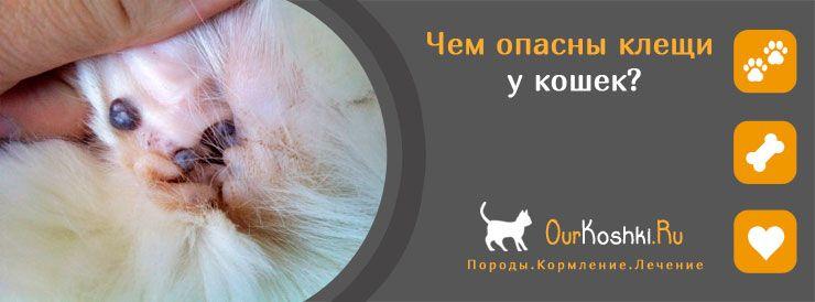 Чем опасны клещи у кошек?