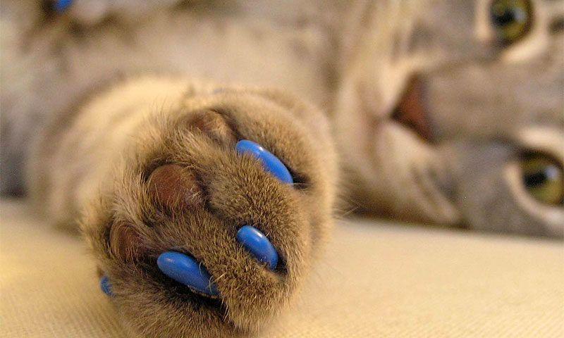 Нужно ли удалять когти у кошек