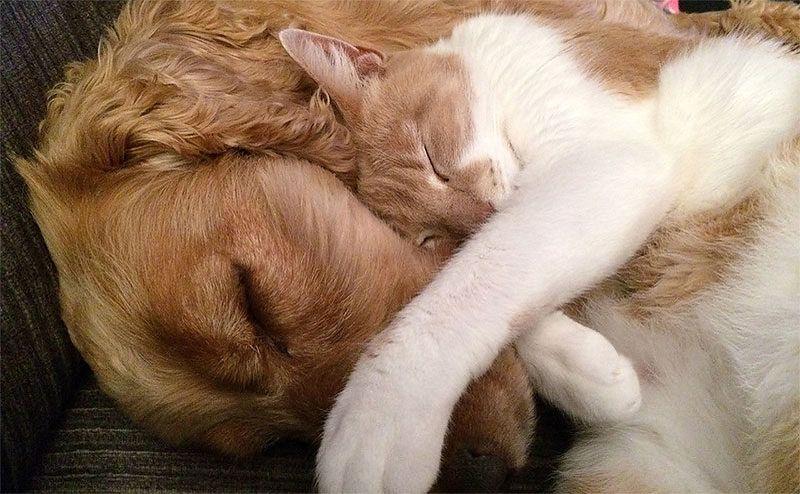 Кошка или собака