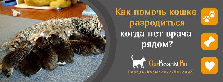 Как помочь кошке разродиться