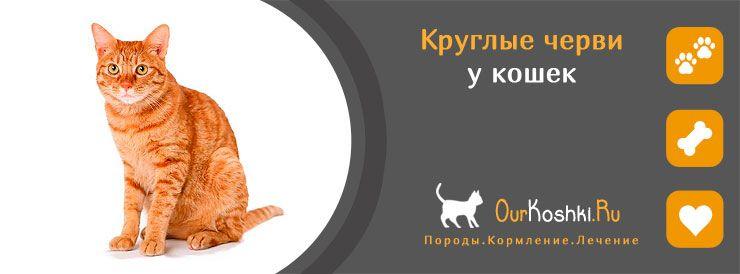 Круглые черви у кошек