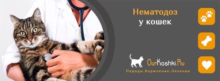 Нематодоз у кошек