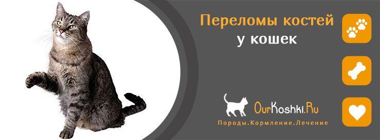 Переломы костей у кошек