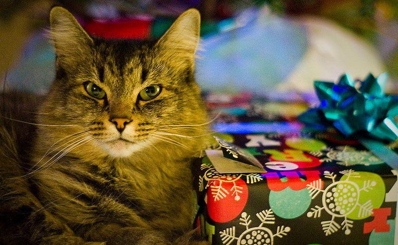 Подарок владельцу кошки