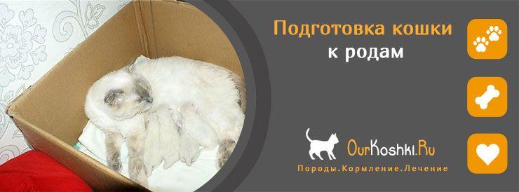 Подготовка кошки к родам