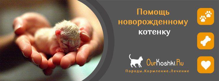 Помощь новорожденному котенку