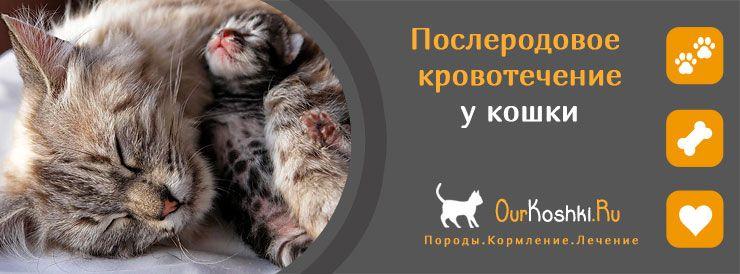 Послеродовое кровотечение у кошки