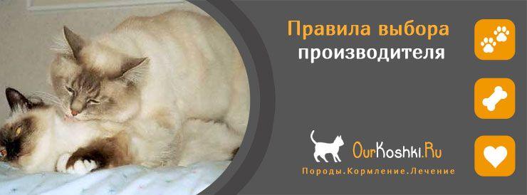 Правила выбора производителя кошки
