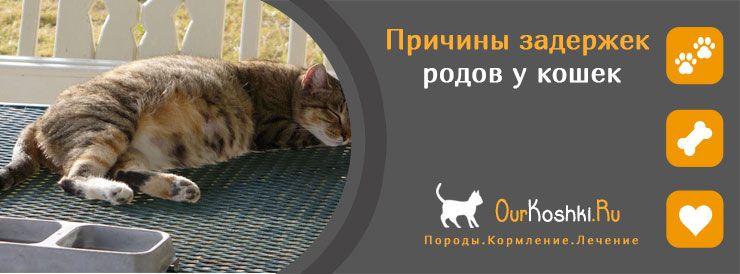 Причины задержек родов у кошек