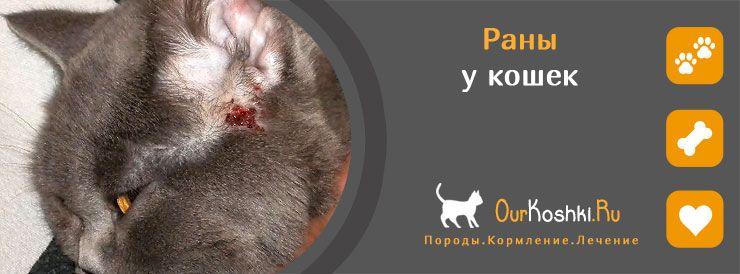 Раны у кошек
