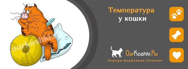 Температура у кошки. Что делать, как лечить?