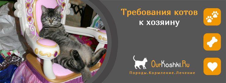 Требования котов к хозяину
