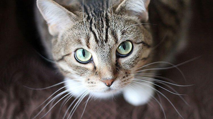 Для чего кошке нужны усы