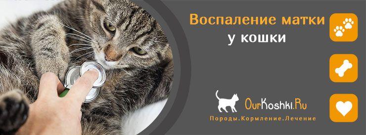 Воспаление матки у кошки